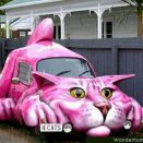 Car for cats
