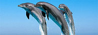 Losinj Island - the first Dolphin Reserve of this type in the Mediterranean Sea